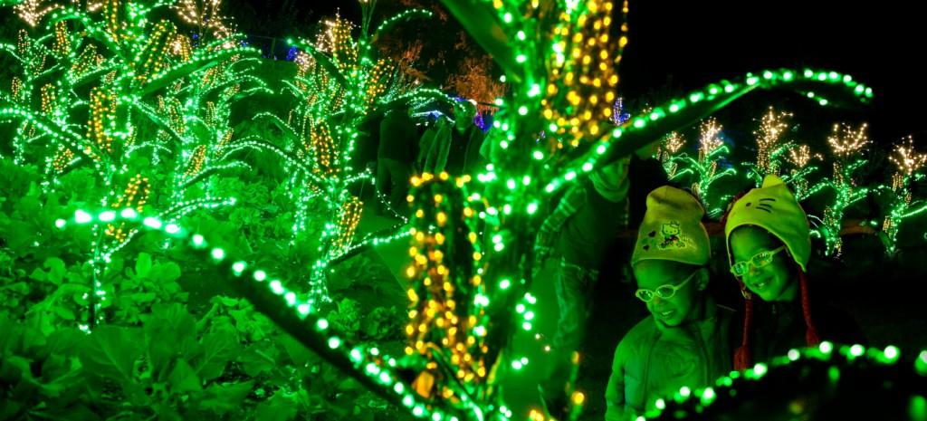 Botanical Garden Lights