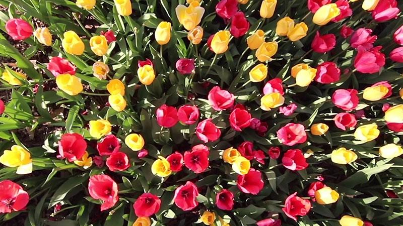 032317B_Atlanta_TMIA_Blooms_800